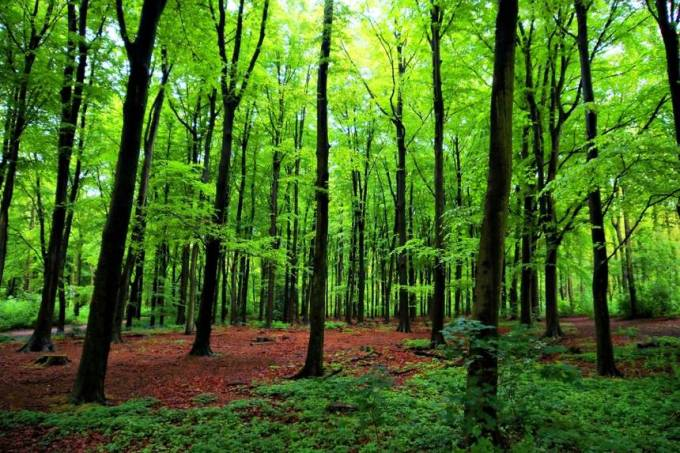 green-forest-trees.jpg.860x0_q70_crop-scale